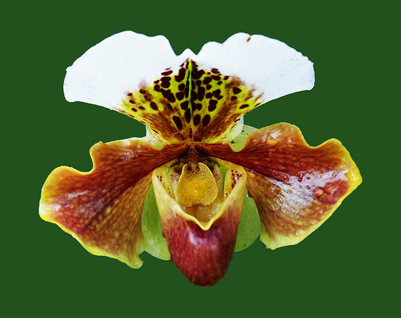 9-Orchid at Kew2.jpg