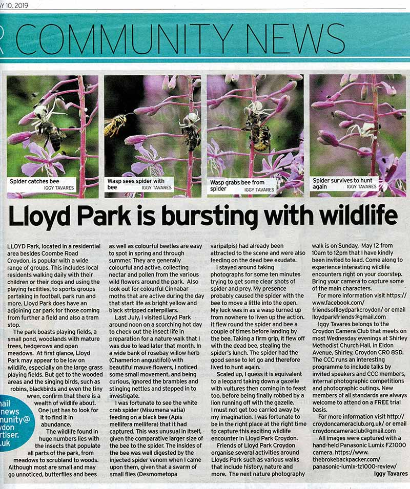 Lloyd Park- Croydon Advertiser -Tavares-1x.jpg