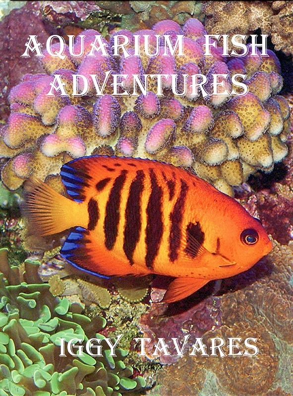 Aquarium Fish Adventures - 2.jpg