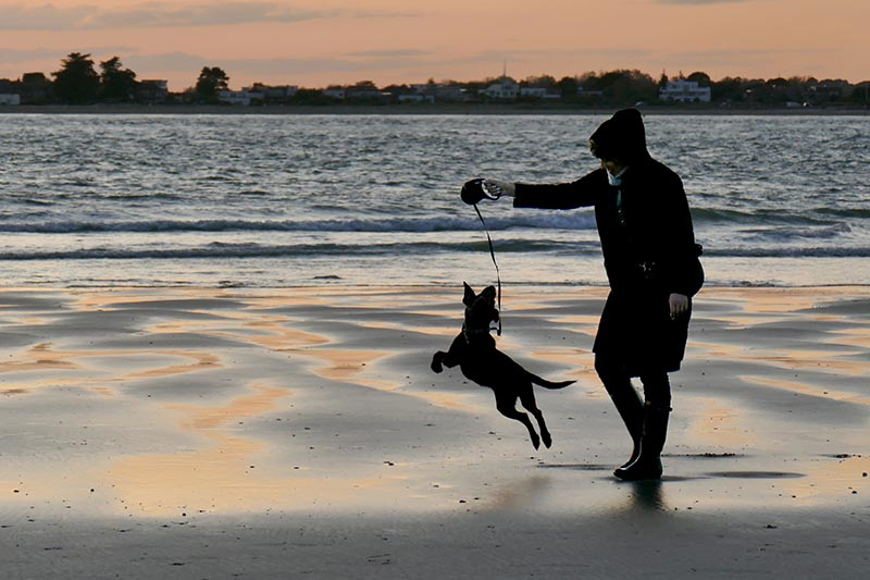 S43-Playful Dog at Sunset.jpg