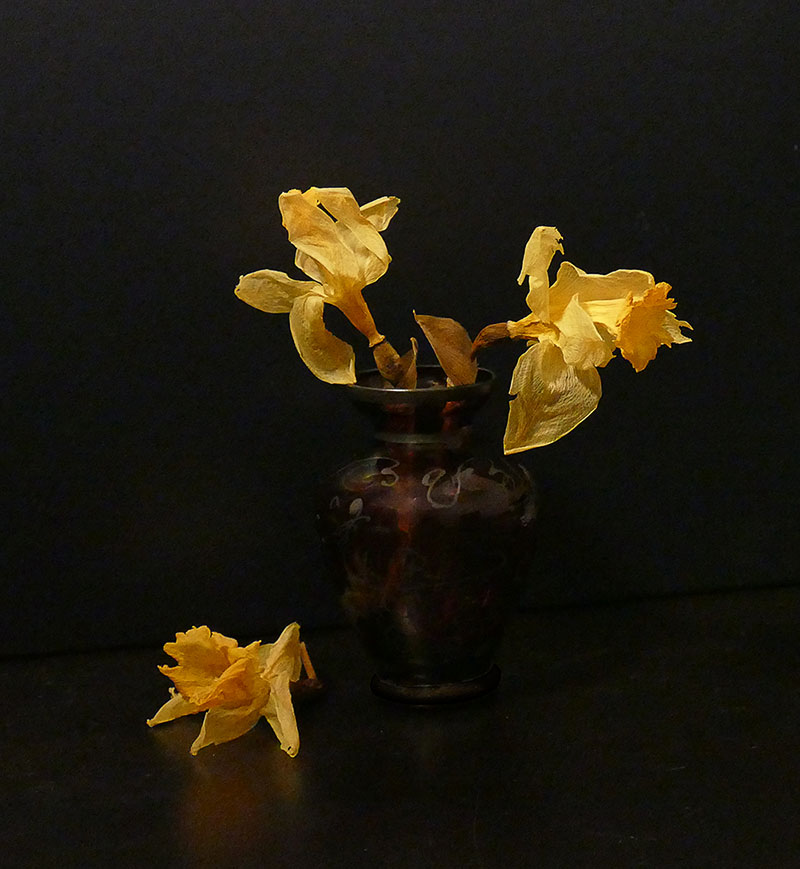 S51 -Fading Daffodils in the Dark-3.jpg