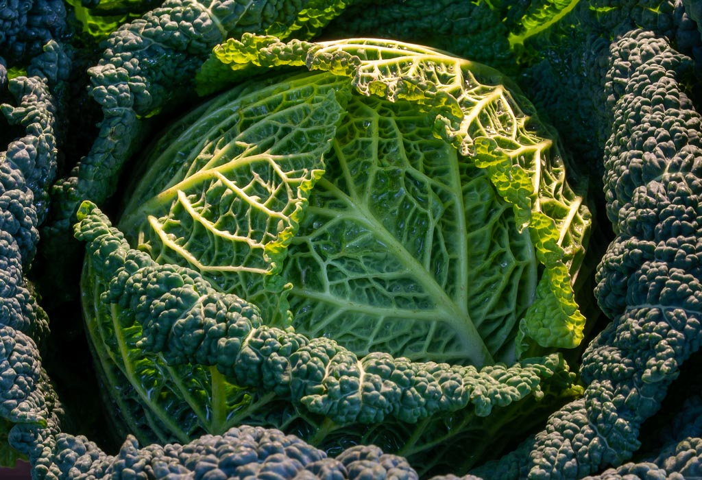 Savoy Cabbage for Dinner (1 of 1).JPG